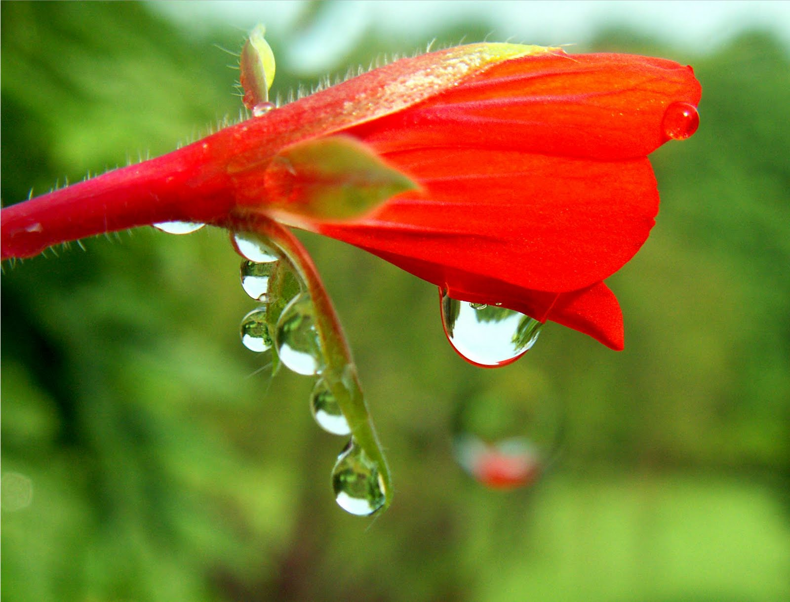 The Secret Garden: water drops on flowers