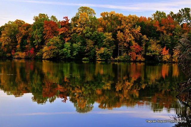 Yaprak Soysal Photography Fall Foliage Lums Pond