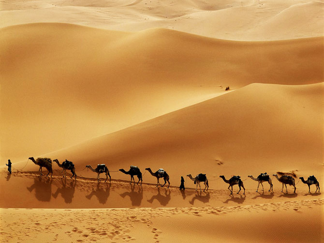Desert Camels - Beautiful Photographs Collection | Rite ...