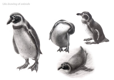 Easy Animal Drawings in Pencil For Kids Animal Drawings in Pencil For