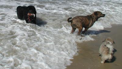 Dogs Of Orange County Huntington Dog Beach In Orange County Ca