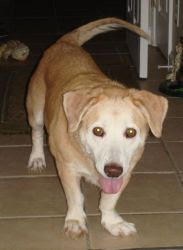 Senior Pets: All They Need Is Love: Adopt Polly, 8 year ...