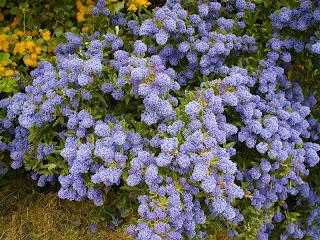 Deanna Glory Landscape And Garden Design Winter Flowering