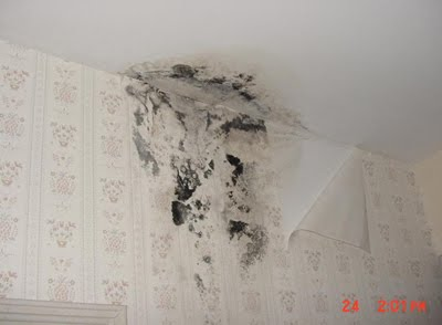Mold In Bathroom Harmful health: black toxic mold, its symptoms, prevention, and removal