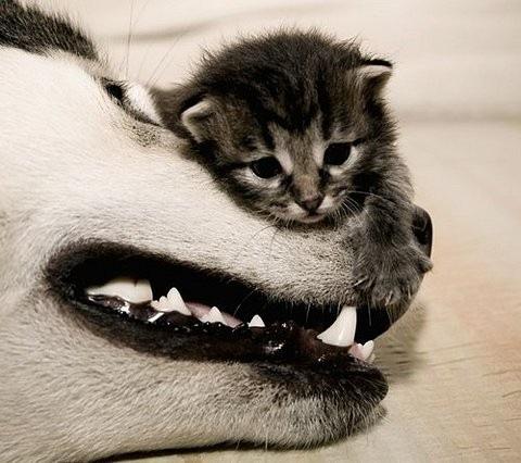 http://1.bp.blogspot.com/_l4-QAyhv2Sc/TObpWfdfG3I/AAAAAAAAAEo/tDeihYyWQ8c/s1600/cat%2Band%2Bdog.jpg