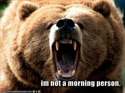 morning bear