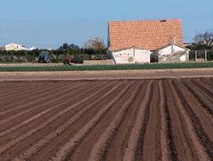 Huerta valenciana