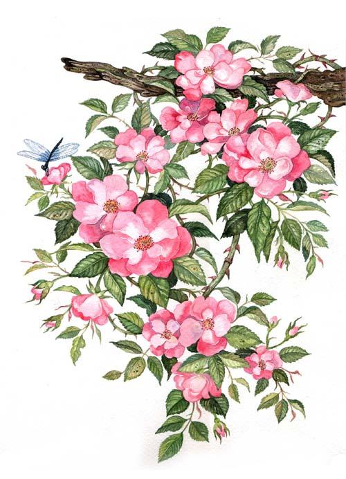 [ดอกไม้1.jpg]