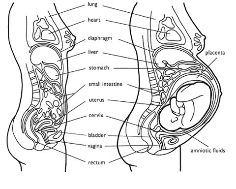 surrogate mother - growing a family: september 2010 pregnant belly diagram
