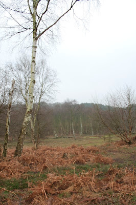 Rammamere Heath & King's Wood
