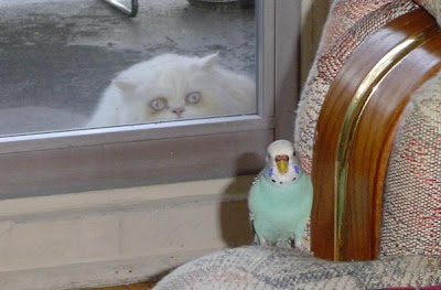 photo of a cat looking through a window at a bird