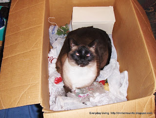 photo of Koko in a box
