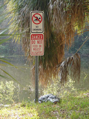 crocodile under a warning sign