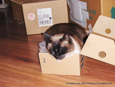 Photo of Koko in small box