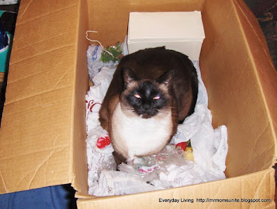 Photo of Koko in big box