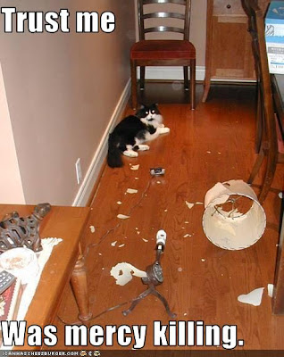photo of a cat whotrashed a lamp