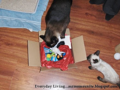 koko and yum yum investigating their gift