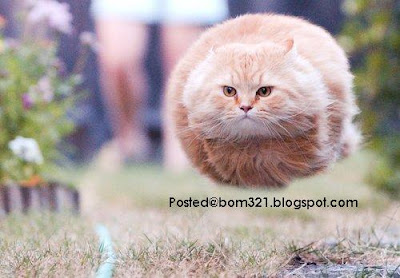 cat like ball