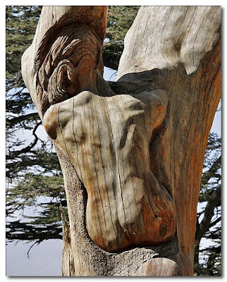 man's body carved int a tree