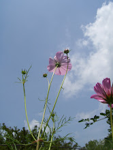 Cosmos Against the Sky