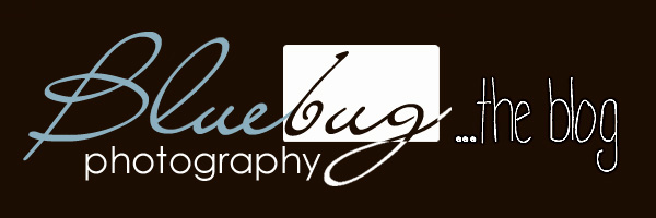 Bluebug Photography