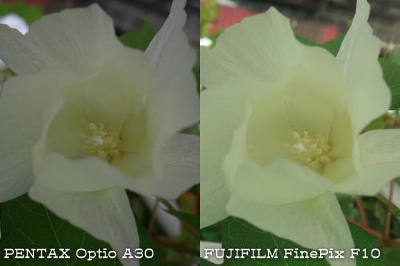 [求助] PENTAX Optio A30 近拍花朵的效果?