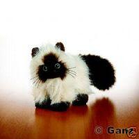 2008 Webkinz Himalayan Cat
