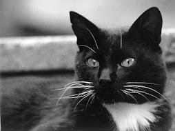 ¨*Gato negro¨*