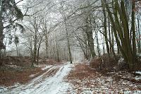 Ochsenweg