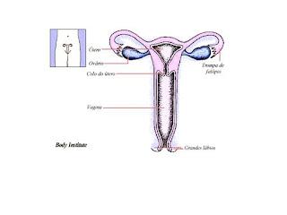 candidiase mamária amamentação