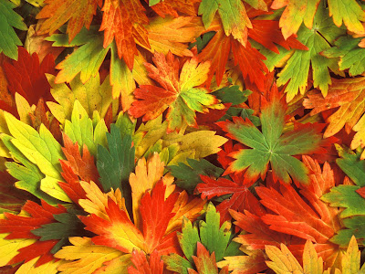 alfombra-de-hojas-de-diferentes-colores