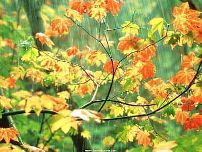 ramas-con-hojas