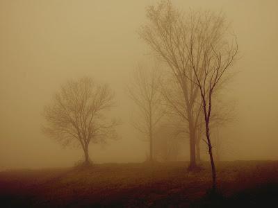 arboles-sin-hojas-entre-una-espesa-niebla