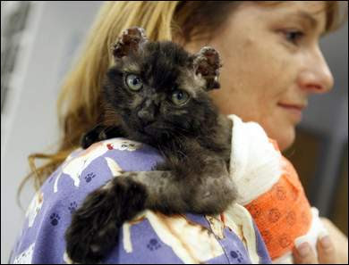 Cat Defender: Burned Nearly to Death by Laughing Teenage Girls, Two