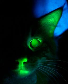 gatos de capdepera