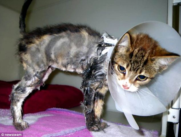 Cat Defender Sticky Loses Most Of Her Fur After She Is