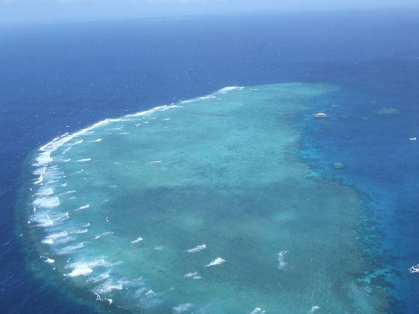 [reef1.jpg]