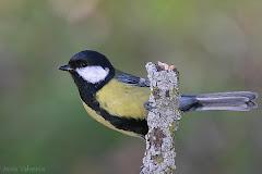 Las aves de nuestras sierras