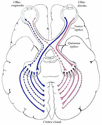 O Sentido dos Sentidos: Fisiologia ocular (parte 2)