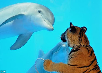 Dolphin and Tigress
