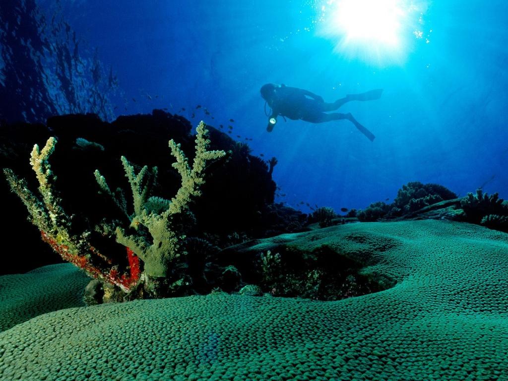Wallpapers Globe: Underwater Life Wallpapers