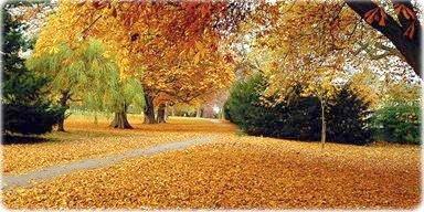 Outono - Oxford