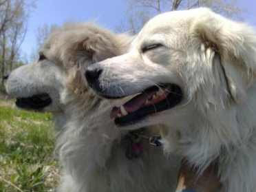 2 Dogs 2000 Miles Hudson and Murphy