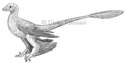 Utako Kikutani Illustration (English)