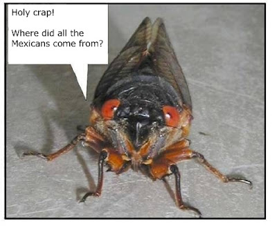 The cicada and the illegal aliens