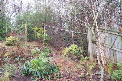 Grass to osmanthus fairegarden - Olive garden spring hill tennessee ...
