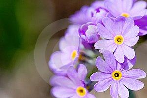 [blossom-lilac-flowers-thumb5251022.jpg]