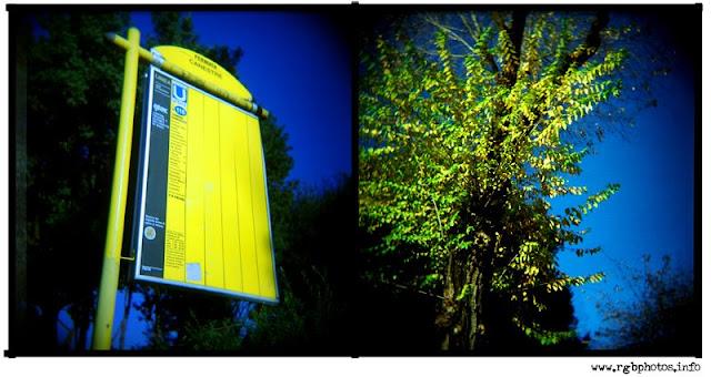 composizione di due fotogafie scattate con Holga 120 CNF, a sinistra fotografia di cartello di fermata dell'autobus a roma, a destra fotografia di albero in autunno con le foglie gialle