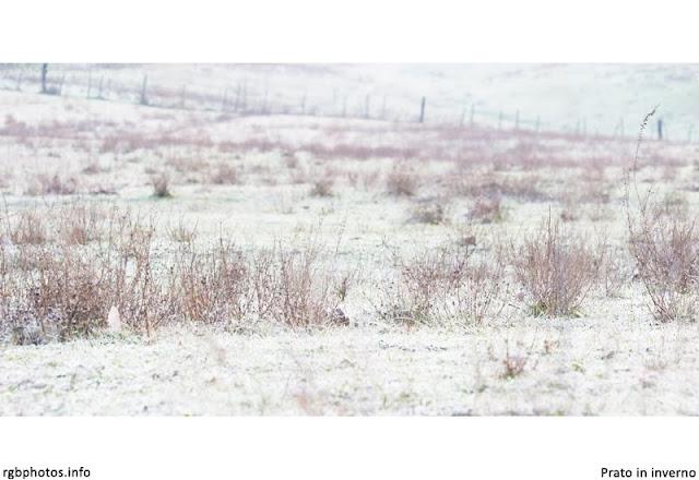 Fotografia di un prato in inverno imbiancato dalla brina