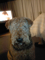 Muis the Airedale Granny!